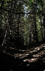 How About Nope? (ETt_) Tags: dark scary horror forest path shadow light trees branches