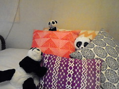 DSC03765 (classroomcamera) Tags: home house bed bedroom panda pandas three trip pillow pattern patterns detail details decoration decorations red purple grey black white yellow gold golden hide hidden go seek stuffie stuffies comfortable comfort soft fuzzy furry touch touching texture rest resting sleep sleeping