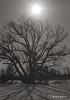 Sous le soleil de mars... (Argentique) / Under the sun in march... (Film) (Pentax_clic) Tags: agfa super silette solagon f2 argentique film nb bw mars 2012 kodak plusx arbre tree soleil robert warren vaudreuil quebec
