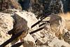 2006_11_04_francisdam_30 (Nfrastructure) Tags: 20061104 stfrancisdam stfrancisreservoir water flood catastrophe concrete valley arid geology sanfrisquitofault sandstone conglomerate schist mica losangelesbureauofwaterworksandsupply