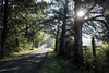 Gotta love Tennessee... (Leah (@area25artistry)) Tags: trees road tennessee nashville southern living earthpics landscapes landscape fuji fujifilm fujinon nature mirrorless morning light sunflare sun backlight backlit filmsimulation x xseries xt1