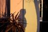 | Berkeley, CA | 2018 ([DV8] David Patrick Valera) Tags: wetzlar dv8street dv8 norcal leica sanfrancisco summicron35 reddot streetphotography humancondition photographers leicam10 rangefinder leitz leitzpark davidpatrickvalera