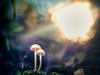 Proteccion solar (www.studio360fotografia.es) Tags: leitzcolorplan90mm25 setas valdeinfierno seta mushroom fungi proteccion solar nature naturaleza fantasia fantasy bokeh desenfoque colores color colors olympus omd em10 proyector projector