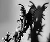 Shadow Fae (isleen72) Tags: blackandwhite monochrome fairy shadows shadow tempusaura 2018photochalenge 10thanniversaryphotochallenge photochallenge