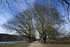 Structure (MoJo_3016) Tags: köln cologne colonia deckstein weiher pond lido allee alley platanen planes platane baum bäume winter hiver