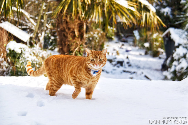 Henry  in the snow - 'Beast from the East'
