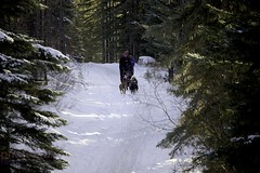 IMG_8293 (zawaski -- Thank you for your visits & comments) Tags: dogsledding fun zawaski©2018 snowwinter maddogsandenglishman boundry ranch ©2019robertzawaski ©2019 robert zawaski ©2019zawaski finephotography photog ambieantlight beauty