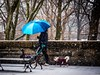 The Blue Umbrella (Mildred Alpern) Tags: umbrella snow outside walker dogs bench wall trees nyc riversidedrive winter