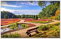 Heidegarten im Hochsommer (Don111 Spangemacher) Tags: schneverdingen himmel heidekreis heide heideblüte hochsommer erika sommer landschaft lüneburgerheide natur naturpark reisen urlaub niedersachsen norddeutschland blüte bunt pflanzen park baum