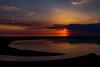 Mother Heron - Landscape (matthewken4722) Tags: bayfrontpark heron sunsetsunrise wildlife bird landscape mother