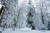 White Mood (Conrad Zimmermann) Tags: fribourg hiking hiver landscape montagne mountain neige paysage randonnée saison season skitour skiderando snow suisse switzerland winter châtelsaintdenis ch
