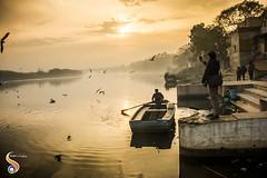 Photograph and Painting (Shikher Singh) Tags: gulls seagulls yamuna yamunaghat boat boatman row oar photographer videographer tourist morning dawn shore amber clouds ripples stairs shikherâsimagery