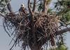 IMG_6794 Eagle's Nest, Galt Preserve, Pine Island, Florida (Wallace River) Tags: eaglesnest florida galtpreserve pineisland