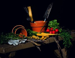 Gardening Still-life #gardening #vegetables #carrots #radishes #rootvegetables #harvest #stilllife (katkazoom1) Tags: gardening vegetables carrots radishes rootvegetables harvest stilllife