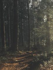Summer mood (petrisalonen) Tags: summer finland nature forest tree trees sun sunlight light sunset sunrays mood green landscape trail