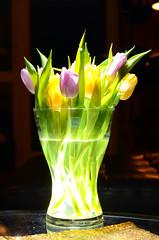 tulips (Wolfgang Binder) Tags: tulip tulips flower flowers still vase nikon d7000 zeiss planar planrt1450 strobe strobist