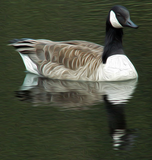 Canada Goose Stourhead Oiled