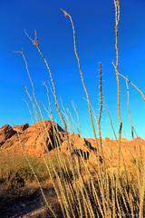 Organ Pipe National Monument (dpsager) Tags: arizona cactus dpsagerphotography organpipecactusnationalmonument