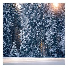 Winter Forest Glow, Saxony, Germany (Nils Leonhardt) Tags: wald schnee baum holz winter snow tree forest wood sunset sonnenuntergang landschaft landscape nikond810 nikon tamron outdoor nature sachsen germany erzgebirge saxony deutschland glow lightpainting tamronsp90mmf2811macro