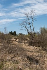 in the marsh (meine.augenblicke) Tags: bäume monschau deutschland nordrheinwestfalen urlaub trees eifel kameranikond750 mützenich 2017 eifelsteig moorlandschaft
