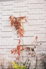 F1050012 (ev3lyn) Tags: heyri art village korea paju