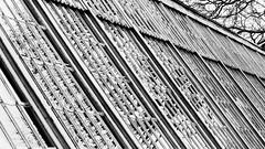 sloping (Francis Mansell) Tags: reflection glass glasshouse greenhouse monochrome delapréabbey northampton pattern geometric blackwhite building architecture tree pane