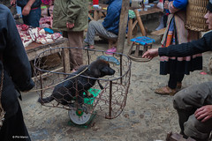Dog sold by the pound at Bac Ha market - Vietnam (Phil Marion) Tags: dog puppy vietnamese hhmong asian oriental philmarion candid woman girl boy teen 裸 schlampe 나체상 벌거 desnudo chubby nackt nu ヌード nudo khỏa 性感的 malibog セクシー 婚禮 hijab nijab burqa telanjang nude slim plump tranny sex slut nipples ass xxx boobs tits upskirt naked sexy bondage fuck tattoo fetish erotic lingerie feet cameltoe cock latina japanese african khoathân beach public swinger toy outdoor cosplay gay wife dick