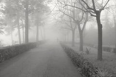 Il possesso della conoscenza non uccide il senso di meraviglia e mistero. Cit. (donatofalcone) Tags: blackandwhite darkness woods winter garden fog nebbia street streetphotography