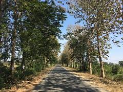 Myanmar, Ayeyarwady Region, Hinthada District, Kyangin Township, Chin Myaung Village Tract (Die Welt, wie ich sie vorfand) Tags: myanmar burma bicycle cycling sepeda ayeyarwadyregion ayeyarwady irrawaddy hinthadadistrict hinthada natpatee kyangintownship kyangin chinmyaung