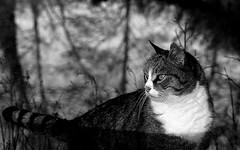 Spats lakeside (Zèè) Tags: spats cat cats chat black blanc noir contrast shadow light dark reflection monochrome white blackandwhite