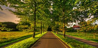 Summer road.