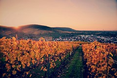 Sunset in the Vineyards (DrQ_Emilian) Tags: landscape view hill vineyards sunset sunlight sunshine color light details rural countryside outdoors fall autumn mood evening dawn travel explore visit yburg ruin stetten kernen remstal remsmurrkreis badenwürttemberg germany europe photography hobby