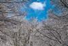 DSC_0653 (f_foschi.) Tags: neve alberi cielo nuvole sky snow clouds trees nature francesco foschi nikond500