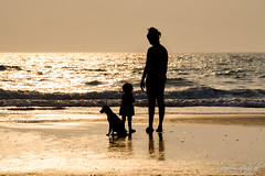 Silhouettes on a Golden Canvas (PB1_0639) (Param-Roving-Photog) Tags: family wife daughter mother kid baby girl dog stray beach sea waves sunset dusk evening silhouette goldenhour shadows naturallight water sand arambol goa nikkor nikon candid photopgraphy