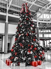 """Life is an experimental journey undertaken involuntarily. It is a journey of the spirit through the material world and, since it is the spirit that travels, it is the spirit that is experienced."" ―Fernando Pessoa ✈️🎄❄️ (anokarina) Tags: adobephotoshopexpress colorsplash appleiphone8 cvg airport red christmas xmas holiday decorations gifts presents kentucky ky greatercincinnatiinternationalairport"