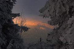 mystical valley (trx_850) Tags: braunlage schnee mystic valley sunset snow trees fog foggy cold winter harz germany