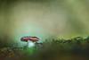 In Green (www.studio360fotografia.es) Tags: setas zeissikontalon valdeinfierno olympus omd em10 bokeh desenfoque mushroom colors colores fantasia fantasy verde green zeiss ikon talon 28 proyector projector