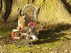 Squirrel with shopping cart (5) (Simon Dell Photography) Tags: winter spring grey animal nature together wildlife sheffield botanical gardens simon dell photography 2018 feb 24 with trolley shopping cart cute funny awesome mini micro full nuts