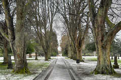 2018-02-24 Grand View Cemetery (04) (2048x1360) (-jon) Tags: anacortes fidalgoisland sanjuanislands skagitcounty skagit washingtonstate washington cemetery grandviewcemetery graveyard tree branches winter a266122photographyproduction tiretracks snow