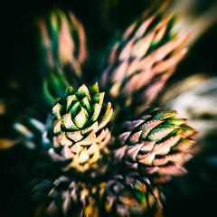 Any Which Way (Thomas Hawk) Tags: america california huntington huntingtonbotanicalgarden losangeles sanmarino southerncalifornia thehuntington usa unitedstates unitedstatesofamerica botanicalgarden cactus desertgarden fav10
