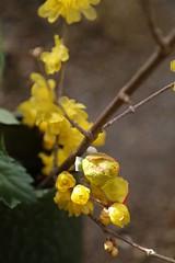 180124014 (murbozero) Tags: murbo japan flower