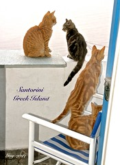 Wow ! ... FOUR CATS on OUR BALCONY in GREECE (Guy Lafortune) Tags: chaise chair balcon balcony four domestic cats quatre chats domestiques santorini island greece île grec grèce autumn automne europa europe hungry faim poil fourrure fur hair vacation vacance holidays gatti gattini month october mois octobre