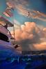 Wonders of Wildlfie National Museum and Aquarium (Adventurer Dustin Holmes) Tags: 2018 wondersofwildlife boat yacht