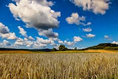 12-07-22 pan korn wolk  schicht franken p1000725-1 (u ki11 ulrich kracke) Tags: franken horizont hügel kornfeld panorama wolke