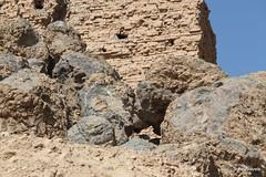 Borsippa Ziggurat (7).jpg (tobeytravels) Tags: borsippa iraq birsnimrud sumarian ziggurat towerofbabel akkadian nabu marduk sumer seleucid josephus cuneiform nabuchadrezzar birs xerxes