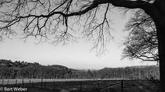 Steinbachtalsperre (weber.bert) Tags: wanderungen 169 analogefotografie blackwhite inbiancoenero noiretblanc grauwertabstufungen sw