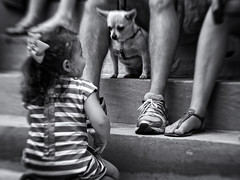 Friends? (Anne Worner) Tags: dog girl people legs sandals shoes steps lensbaby sweet35 composerpro blur bend bendy mono monochrome blackandwhite bw street streetphotography candid child olympus em5 anneworner