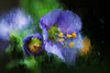 she made a strong impression (rockinmonique) Tags: flower bloom blossom petal macro blue purple yello green impressionistic itsalljennisfault moniquew canon canont6s tamron tamron90mm