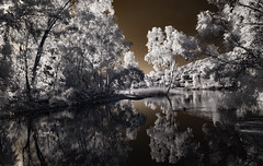 Tree Reflections At Lake Jennings (Bill Gracey 17 Million Views) Tags: lakejennings infrared infraredphotography ir convertedinfraredcamera water trees sky reflections foliage surreal nature naturalbeauty