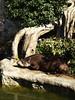 Resting tapir (DameBoudicca) Tags: tokyo tokio 東京 japan nippon nihon 日本 japón japon giappone ueno 上野 uenozoo 恩賜上野動物園 onshiuenodōbutsuen zoo djurpark tiergarten jardínzoológico parczoologique giardinozoologico 動物園 tapir tapire tapiro バク 獏 ばく